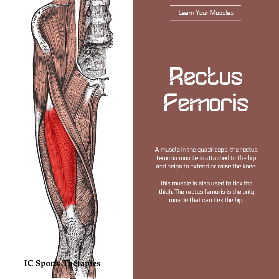 Your Monday Muscle: #7 Rectus Femoris - IC Sports Therapies